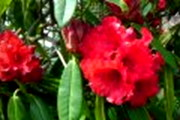 "Link to Facebook album ""First 3D Red Torus Rhodie Photos - 4/10/12"""